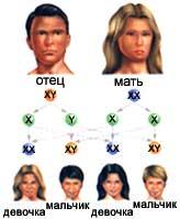 Почему не существует людей обладающих только y хромосомой