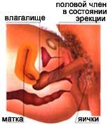 polovoy-akt-s-beremennoy